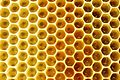 Honeybee worker eggs 12.jpg