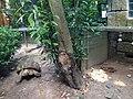 Hong Kong Zoological and Botanical Gardens 08.jpg