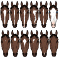 HorseFaceMarkings2.png