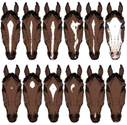 Horse markings - Wikipedia, the free encyclopedia