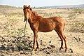 Horse Indian village 01.jpg