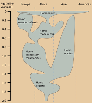 One current view of the temporal and geographical distribution of hominid populations.  Other interpretations differ mainly in the taxonomy and geographical distribution of hominid species.