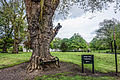 Hungry Tree at King's Inns, Dublin-17565181402.jpg