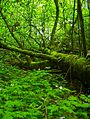 Hyland Woods (formerly Highland Forest Park).jpg