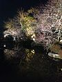Illuminated pond in Kiyomizudera Temple 1.jpg