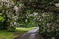 In Greenwich Park-2.jpg