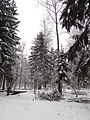 In the outer wood. January 2014. - На опушке леса. Январь 2014. - panoramio.jpg
