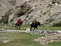India - Ladakh - Trekking - 114 - young monk boys racing donkeys home (3896595768).jpg
