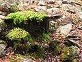 Innisfree Garden, Millbrook, NY - IMG 1581.jpg