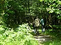 Into The Woods - geograph.org.uk - 524428.jpg