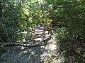 Irene Two Broken Trees.jpg