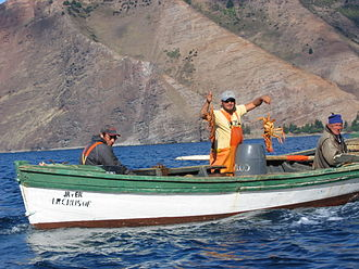 Lobster fishing - Fishermen with their catch of the spiny lobster Jasus frontalis in the Juan Fernández Islands, Chile