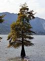 Isola Bella 03 (6155957284).jpg