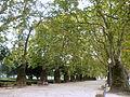 Jardim Cordoaria 1 (Porto).jpg