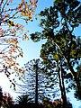 Jardin Japones de Montevideo - panoramio (8).jpg