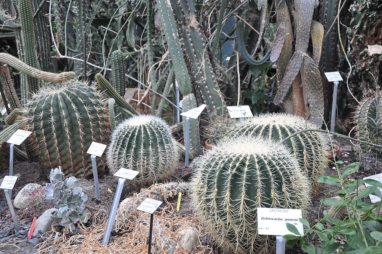 File jardin des plantes toulouse midi pyr n es france wikimedia commons - Toulouse jardin des plantes ...