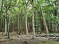 Jasmund National Park 01.jpg