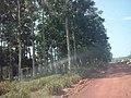 Juara - State of Mato Grosso, Brazil - panoramio - LUIS BELO (47).jpg
