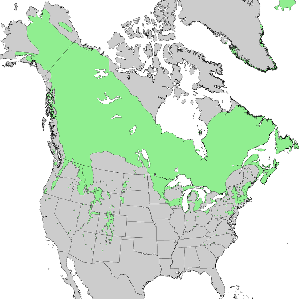 Juniperus communis North American range map 1