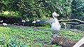 Kaliningrad Zoo - Pelecanus crispus and Flamingos.jpg