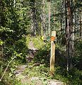 Kangasvuoren luontopolku 2.jpg