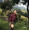Karl Denovnik, Spodnji Dolič, nosi drva 1963 (3).jpg