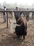 Kashgar Sunday Market (23410271433).jpg