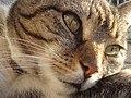 Kat - Katze - Cat - Chat - panoramio - Hänsel und Gretel (1).jpg