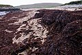 Kelp piles on Norwick beach - geograph.org.uk - 964101.jpg