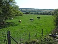 Kidnalls Wood from the railway at Whitecroft - panoramio.jpg