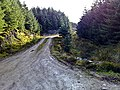Kintyre Forestry Track - geograph.org.uk - 1582227.jpg