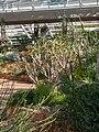 Kirstenbosch National Botanical Garden, Cape Town (P1060020).jpg