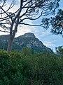 Kirstenbosch National Botanical Garden, Cape Town (P1060066).jpg