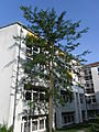 Klinikum Nürnberg Nord Juli 2012 034.JPG