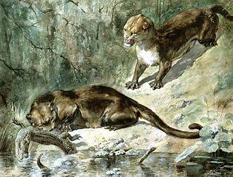 Oxyaenidae - Restoration of Patriofelis by Charles Knight