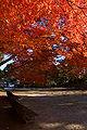 Kobe Suma Rikyu Park14n4592.jpg