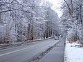 Kongevejen (Marselisborgskovene).jpg