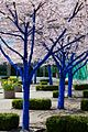 Konstantin Dimopoulos Blue Trees In Blossom.jpeg