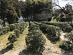 Kosaiso Tea Garden in Shukkei Garden 1.jpg