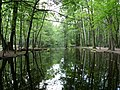 Kuhlake canal at the game reserves in summer.jpg