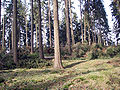 Kyrill-Schäden-09.JPG