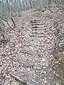 Lépcsők az erdőben, Apáthy-szikla TT, 2017 Nyék.jpg