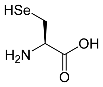 Non-proteinogenic amino acids - Image: L selenocysteine 2D skeletal
