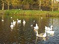 La Haye nov2010 2 (8326144550).jpg