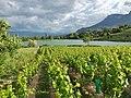 Lac de Saint-André et vignobles.JPG