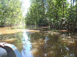 Guianan mangroves A coastal ecoregion of southeastern Venezuela, Guyana, Suriname and French Guiana