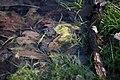 Lainzer Tiergarten März 2014 Tümpel.jpg