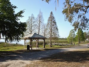 Lake Alfred Travel Guide At Wikivoyage