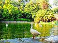 Lake at Lodhi Gardens.jpg