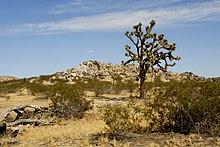 An image of a semi-desert landscape.